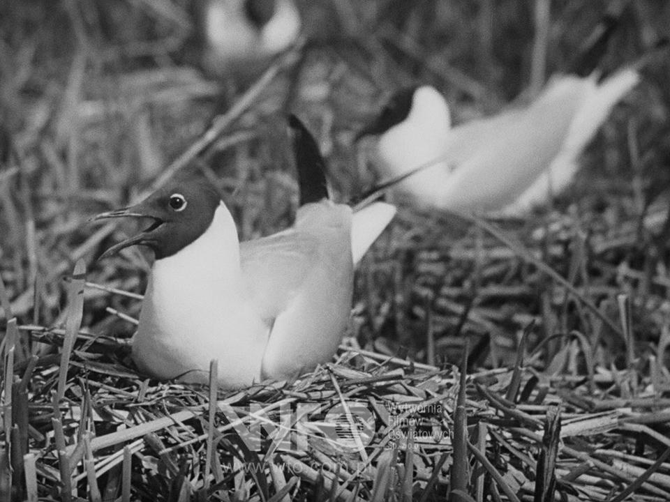 On the bird island